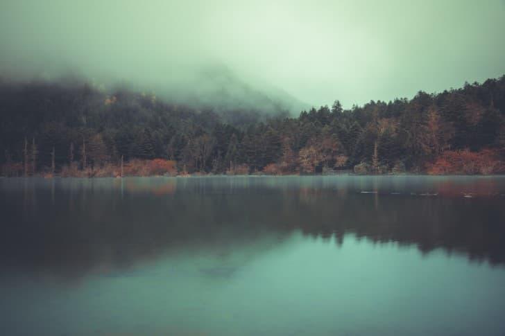 lago cercado por arboles y neblina