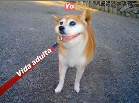 Marcianadas 422 13032020001256 (46)