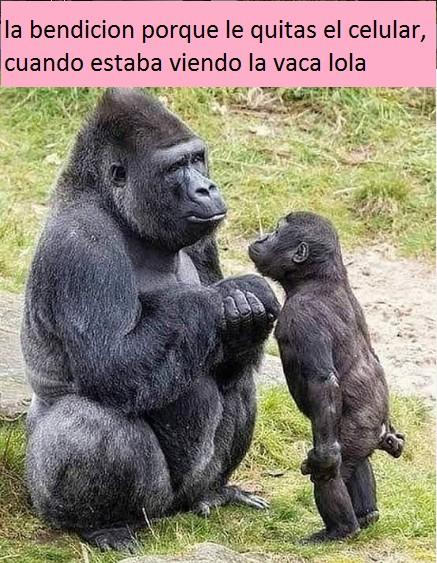 Marcianadas 422 13032020001256 (73)