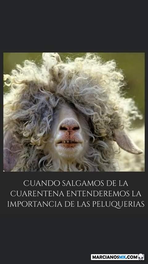 Marcianadas 424 27032020001350 (267)