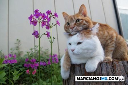 Marcianadas 424 27032020001350 (303)