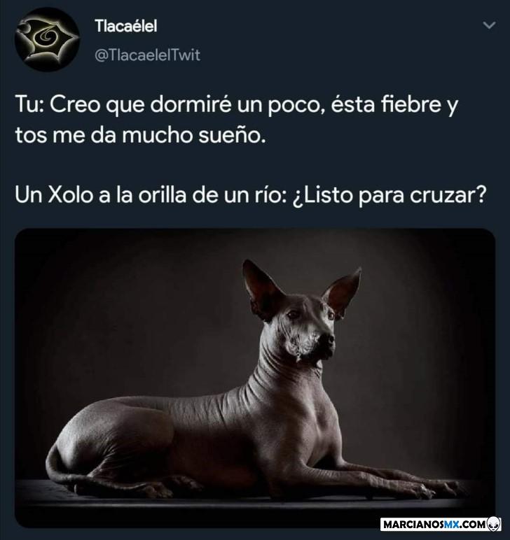 Marcianadas 424 27032020001350 (45)