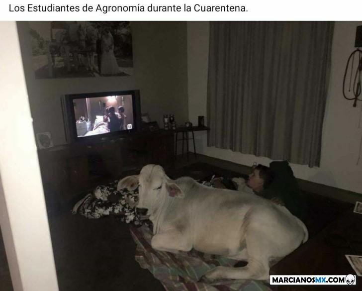 Marcianadas 424 27032020001350 (94)
