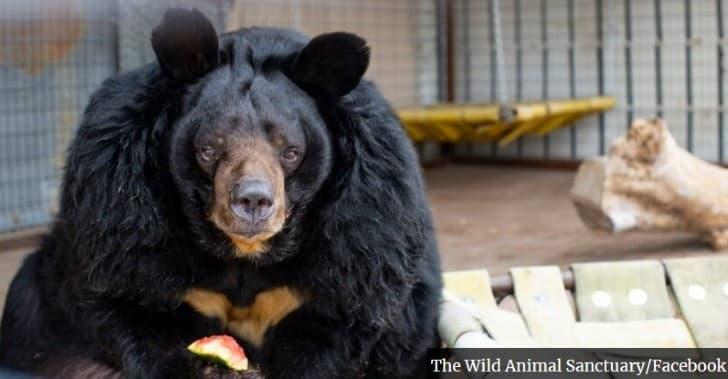 dillan oso obeso