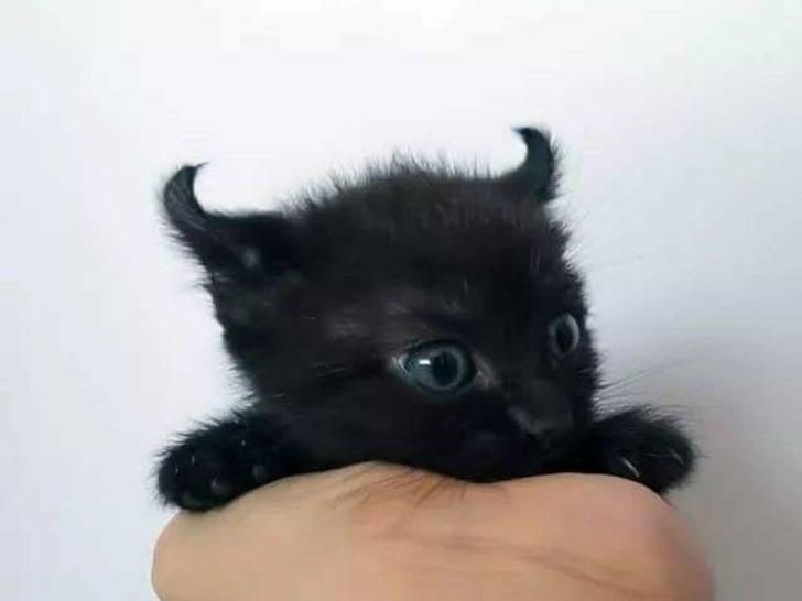 gatito con cuerno negro