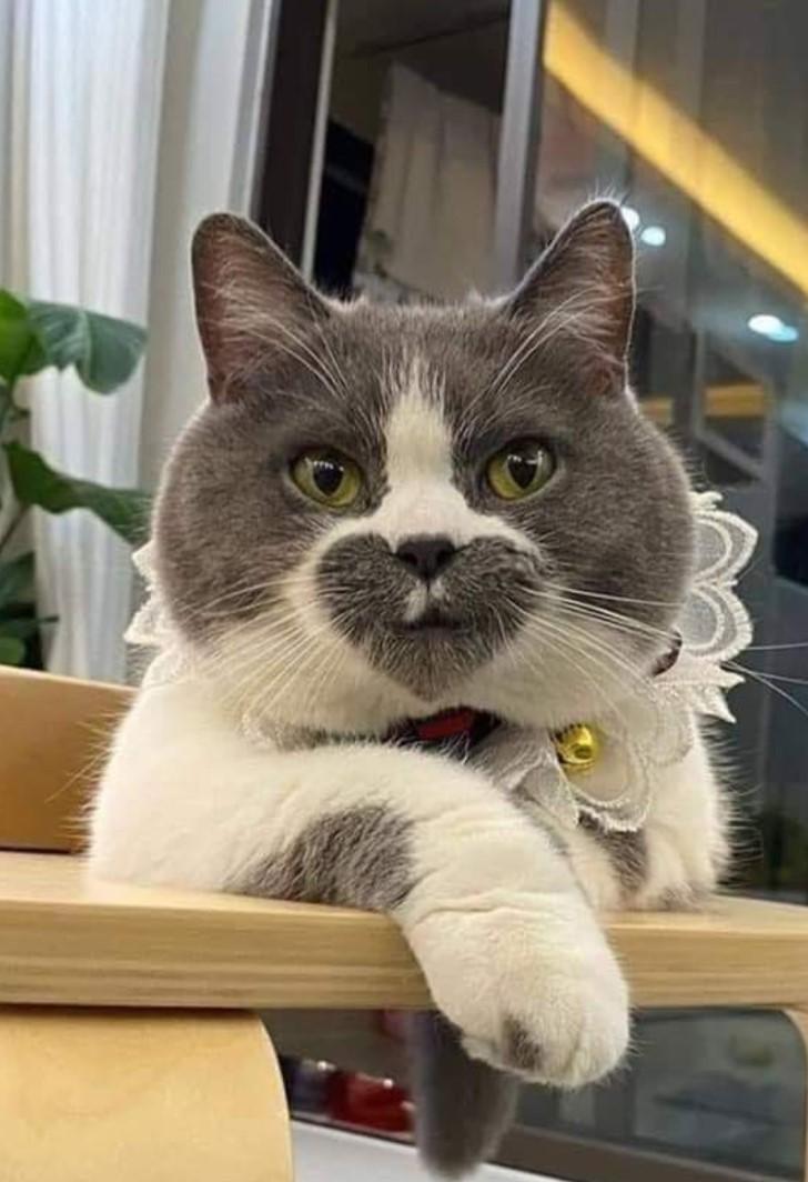gato con corazon en el rostro