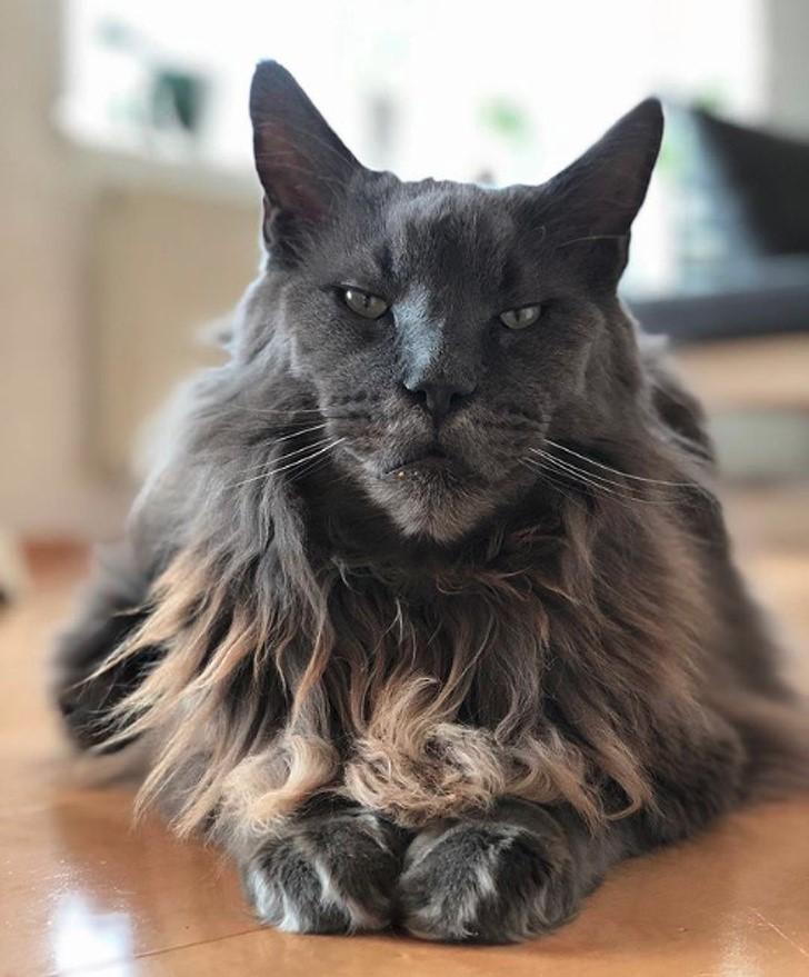 gato legendario