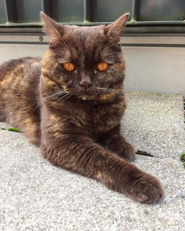 gato ojos infernales