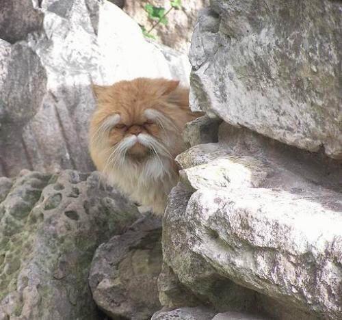 gato sensei