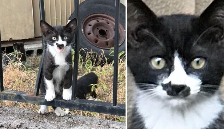 gato tuxedo con silueta de gato
