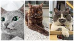 22 gatos adorables con apariencia única