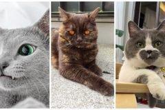 gatos peculiares