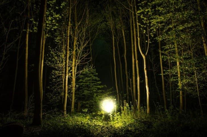 orbes en el bosque