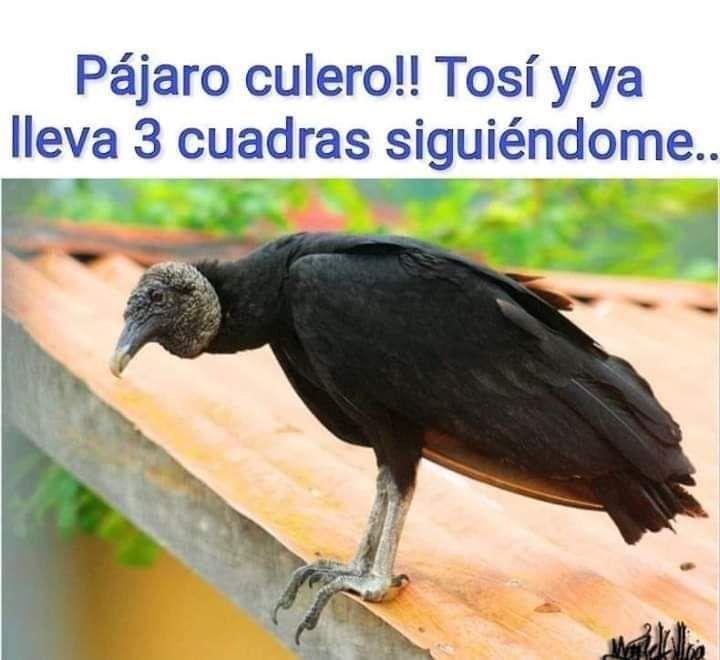 Marcianadas 426 10042020001248 (148)