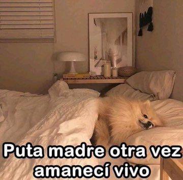 Marcianadas 426 10042020001248 (150)