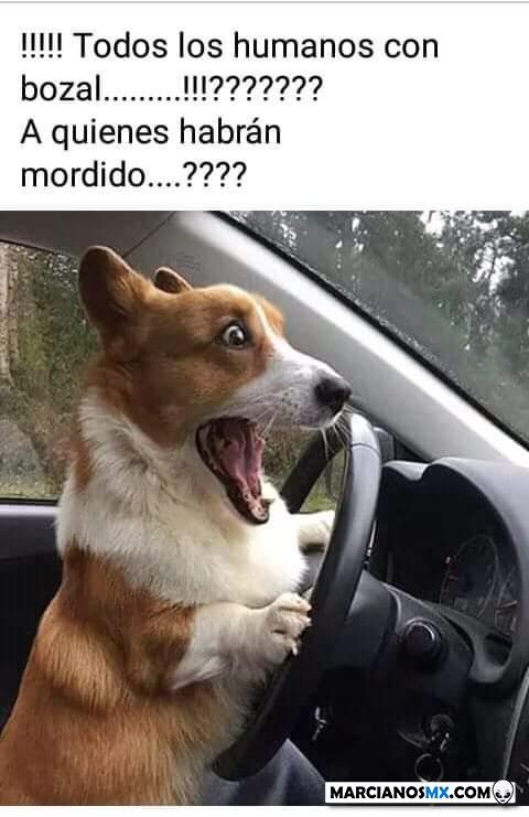 Marcianadas 426 10042020001248 (196)