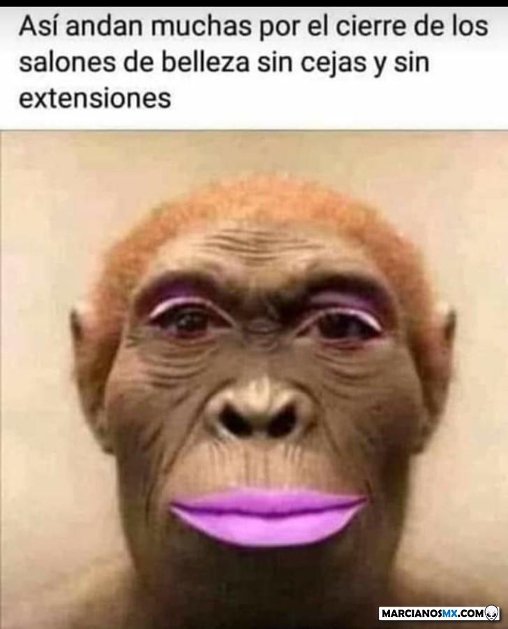 Marcianadas 426 10042020001248 (31)