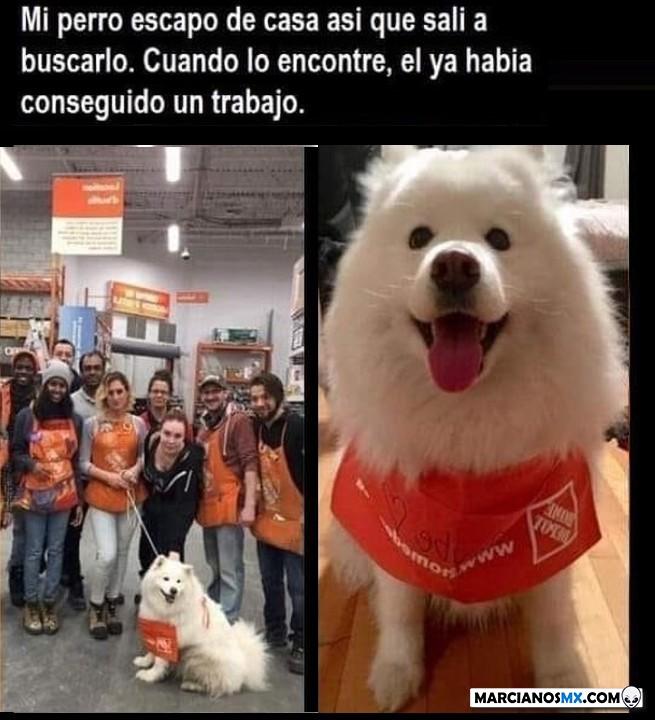 Marcianadas 426 10042020001248 (38)