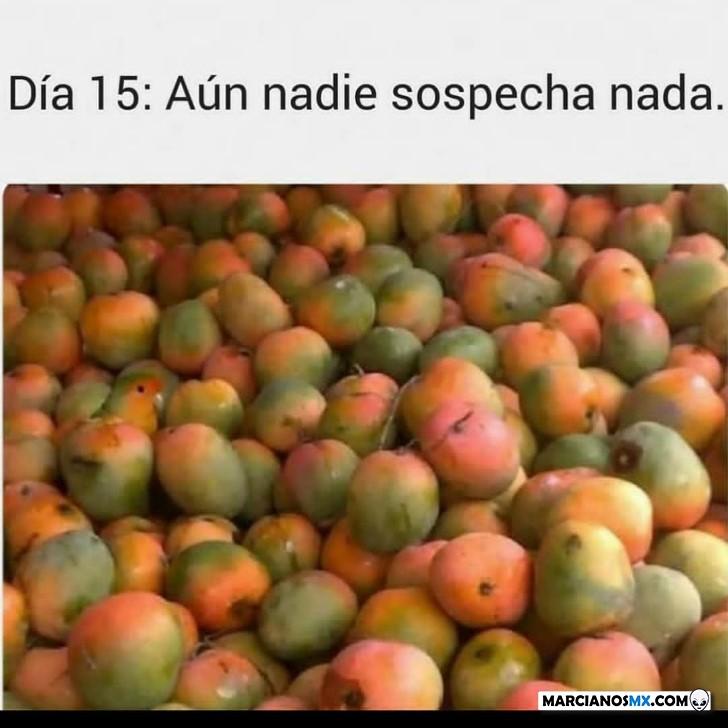 Marcianadas 427 17042020001255 (300)