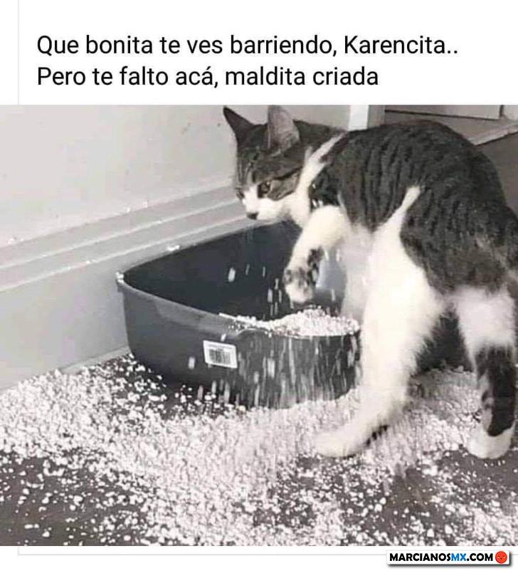 Marcianadas 428 24042020001459 (156)