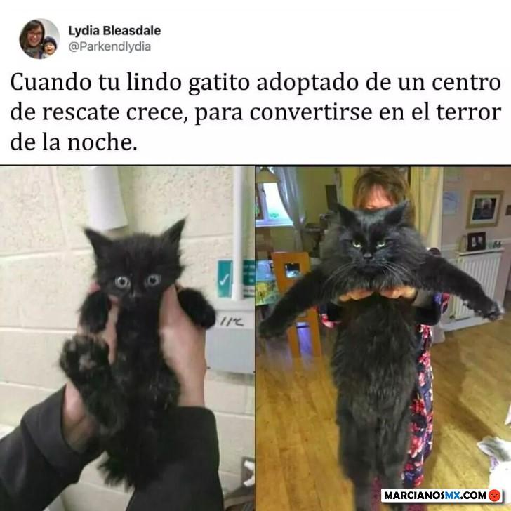 Marcianadas 428 24042020001459 (165)