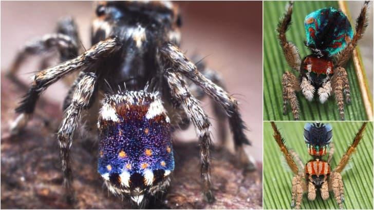 arañas recien descubiertas