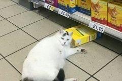 gato ladron