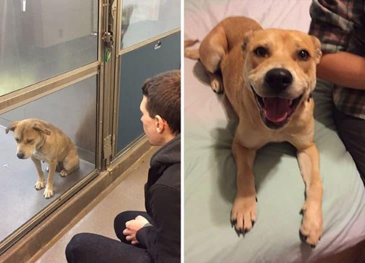 perro adoptado antes y despues
