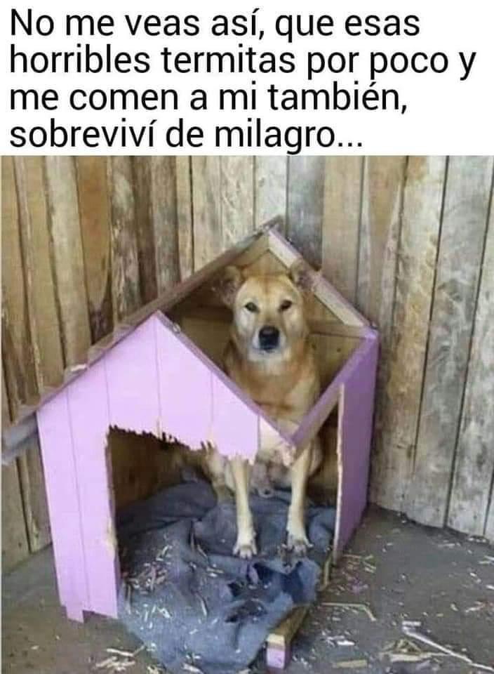 Marcianadas 430 08052020001349 (178)