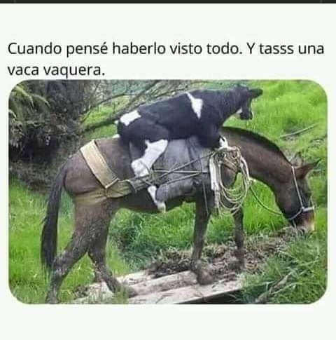 Marcianadas 430 08052020001349 (296)