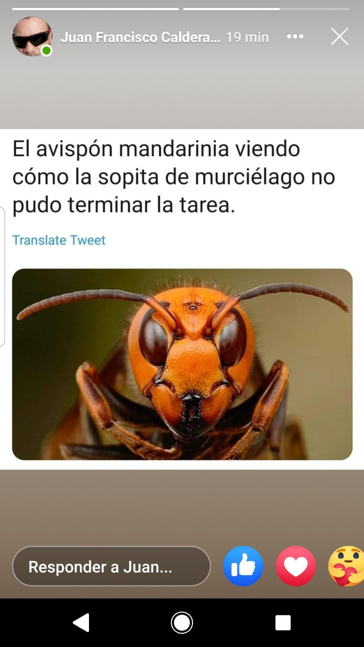Marcianadas 430 08052020001349 (398)