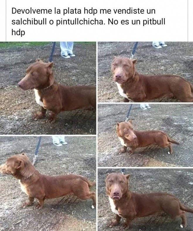 Marcianadas 431 15052020001243 (188)