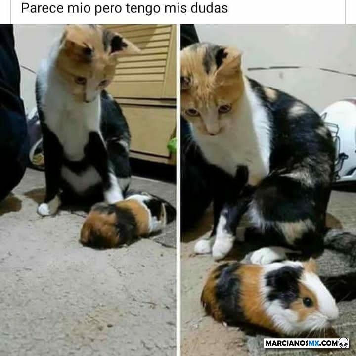 Marcianadas 431 15052020001243 (256)