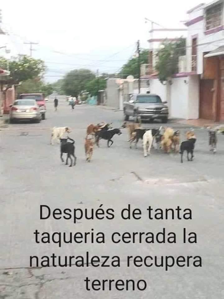 Marcianadas 432 22052020001425 (75)