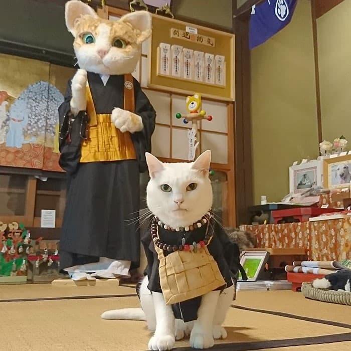Nyan Nyan Ji Templo o Cafeteria Japones de gatos (1)