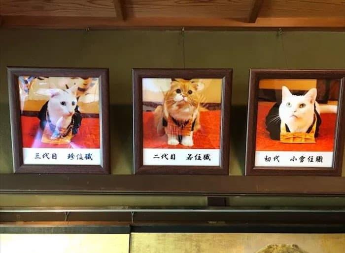 Nyan Nyan Ji Templo o Cafeteria Japones de gatos (10)