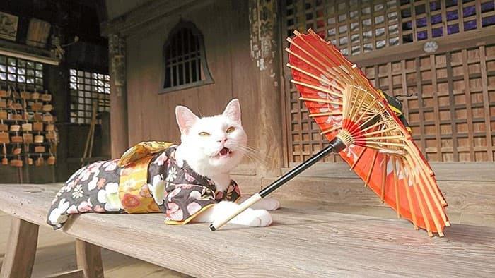 Nyan Nyan Ji Templo o Cafeteria Japones de gatos (17)