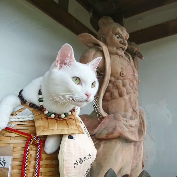 Nyan Nyan Ji Templo o Cafeteria Japones de gatos (18)