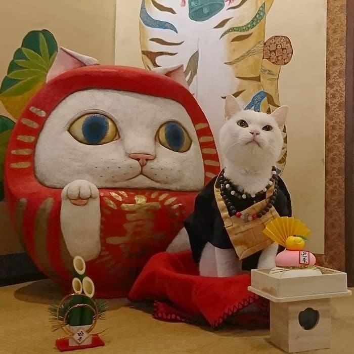 Nyan Nyan Ji Templo o Cafeteria Japones de gatos (20)