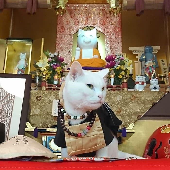 Nyan Nyan Ji Templo o Cafeteria Japones de gatos (3)