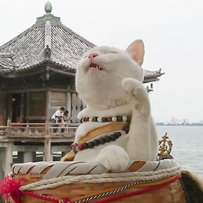 Nyan Nyan Ji Templo o Cafeteria Japones de gatos (7)