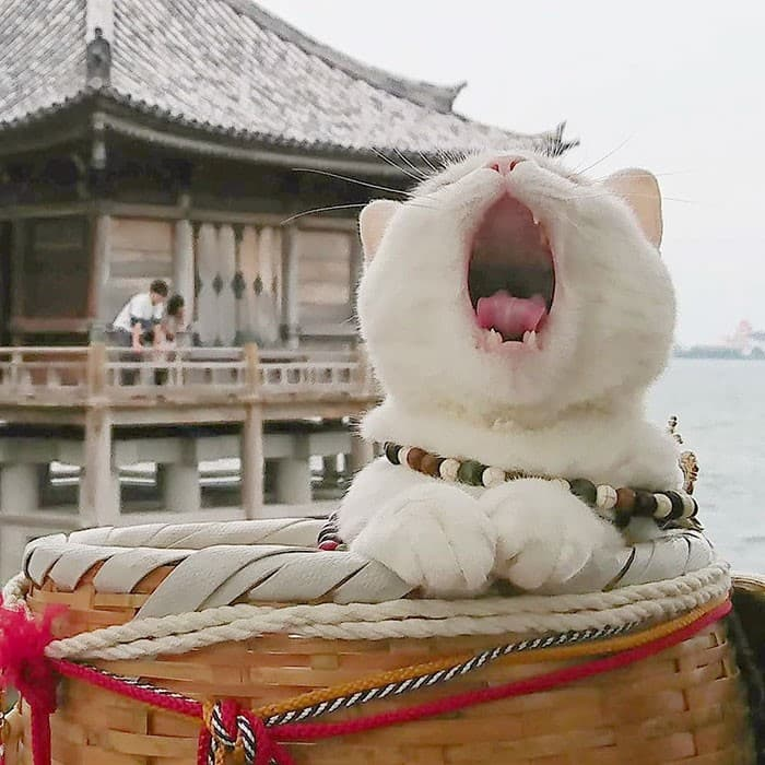 Nyan Nyan Ji Templo o Cafeteria Japones de gatos (8)
