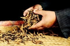 Yartsa Gunbu: un hongo que vale su peso en oro