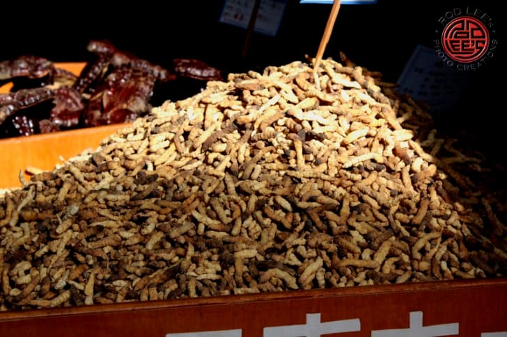 Yartsa Gunbu hongo en las larvas