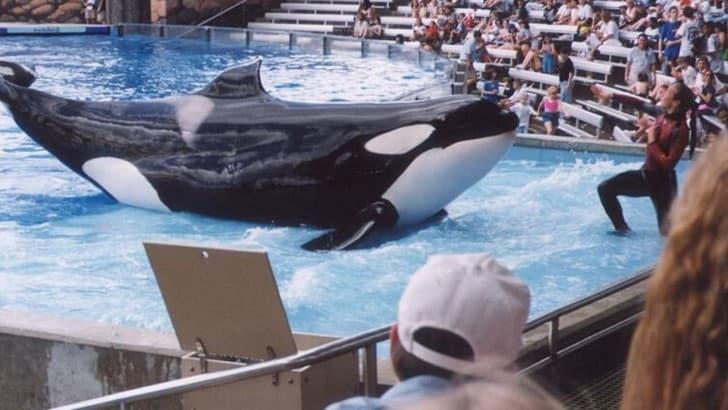 orca Katina