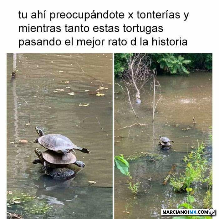 Marcianadas 435 120620201217 (150)