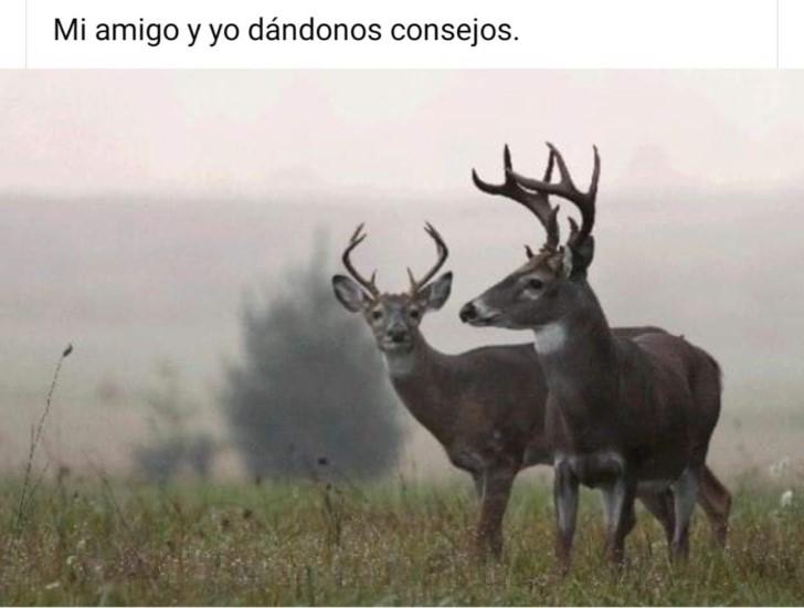 Marcianadas 436 19062020001453 (235)