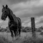caballo solitario en un corral