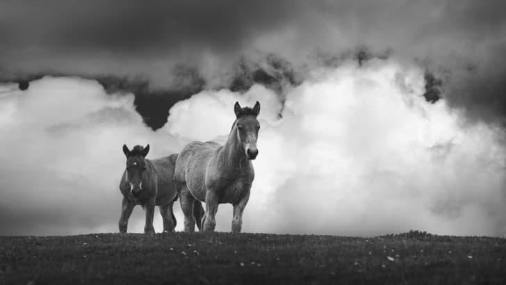 caballos en el campo
