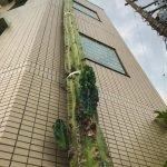 cactus gigante en Takinogawa Japon (1)